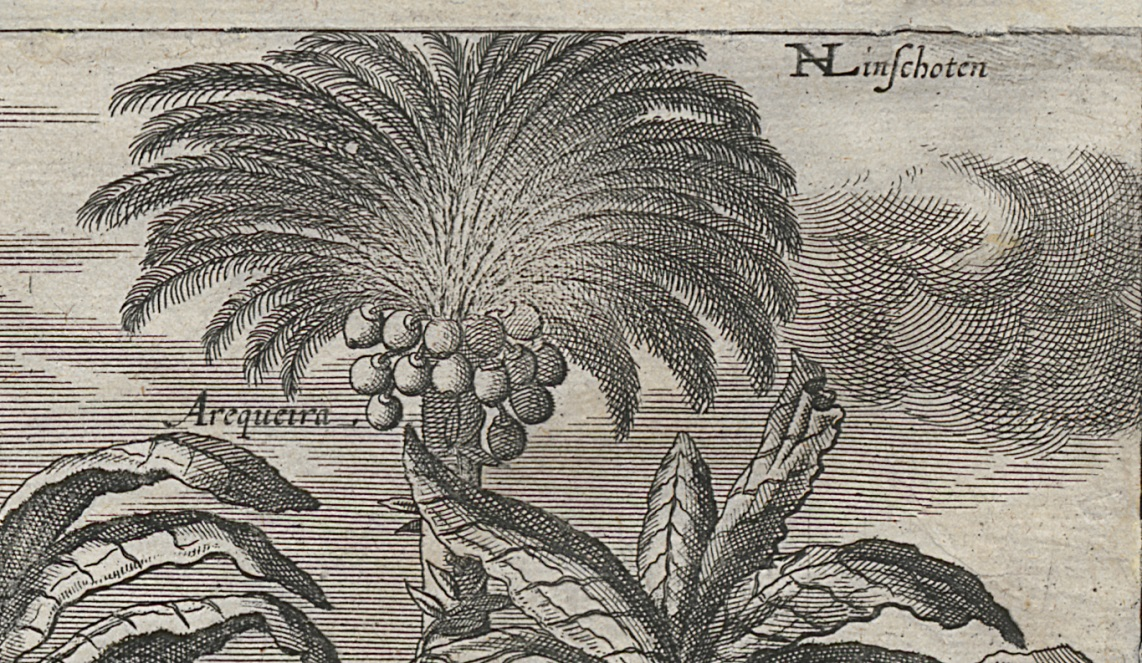 Detail showing the coconut palm, Habits and Manners of Indians, engraving, Baptist van Doetechum and Adriaen Cornelisz van Linschoten, Netherlands, 1614–46. Gift of Mrs. Robert W. Trump 1967.0227 A